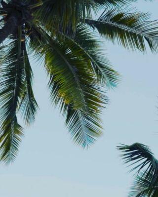 🏖 C'est les vacances !  📅 Quelques jours d'une pause bien méritée. 😍  ⏱ Néanmoins les posts continueront et j'aurais un (tout, tout petit) œil sur vos messages et mails.  🎉 Bon week-end et bonnes vacances à ceux qui seront en week-end et en vacances.   💪🏻 Bon travail et bon courage à tous les autres !  🚀 À très vite !  #commyounot #commyounity #montargis #vacances #holidays #farniente #workaholic #piscine #holidays #courage